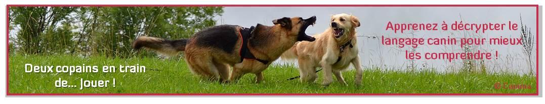 Canima - www.canima.net - Morsure chien