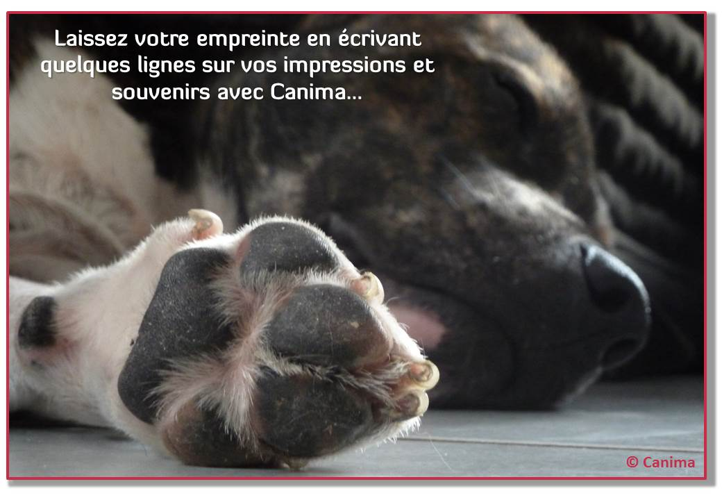 Canima - www.canima.net - Témoignage