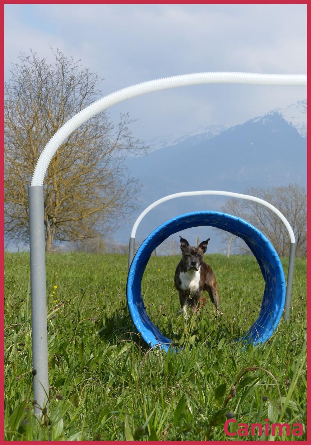 Canima loisirs hoopers agility